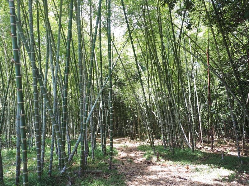 Bambu na estrada fotos de stock royalty free