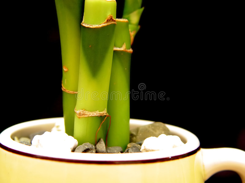 Bambu No Copo Foto de Stock Royalty Free