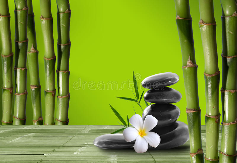Bambu novo, verde no boke do fundo fotos de stock