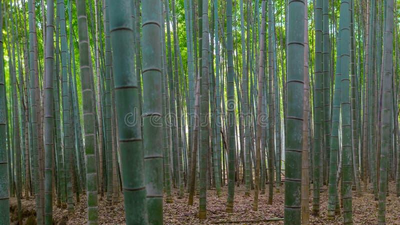 Bambu o mais forrest imagens de stock