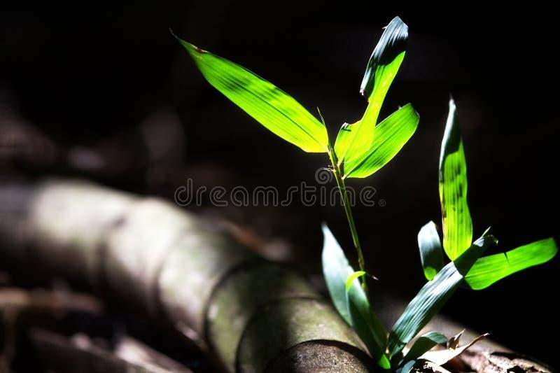Bambu para o fundo fotografia de stock