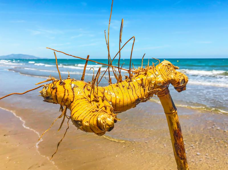 Bambu rotar fotografering för bildbyråer