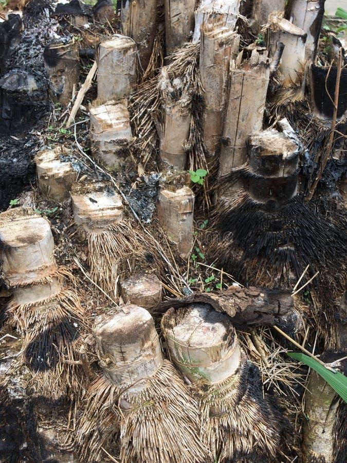 bambu rotar var brännskadan arkivfoto