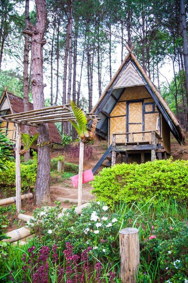 Bambu som förlägga i barack för att vila i pinjeskog royaltyfri fotografi