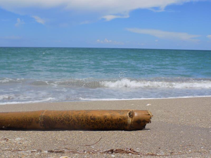 Bambu som sköljas upp på stranden på den södra florida stranden arkivfoto