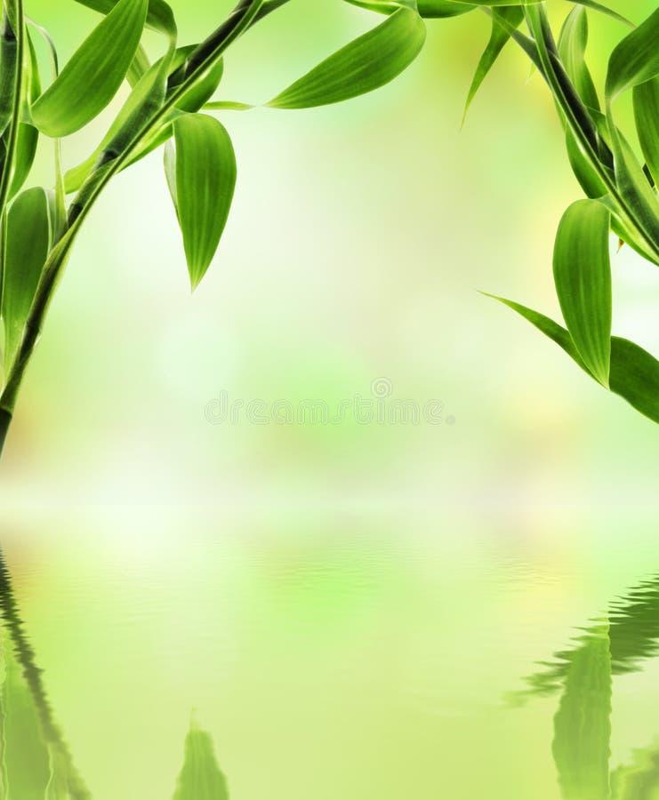 Bambu verde imagens de stock royalty free