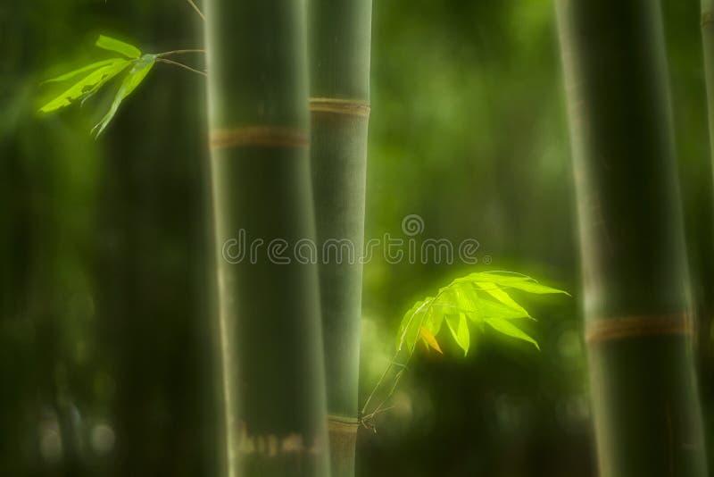 Bambu verde ilustração royalty free