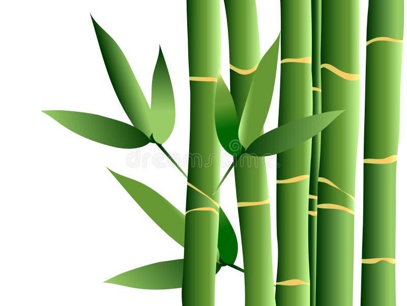 Bambu, vetor ilustração royalty free