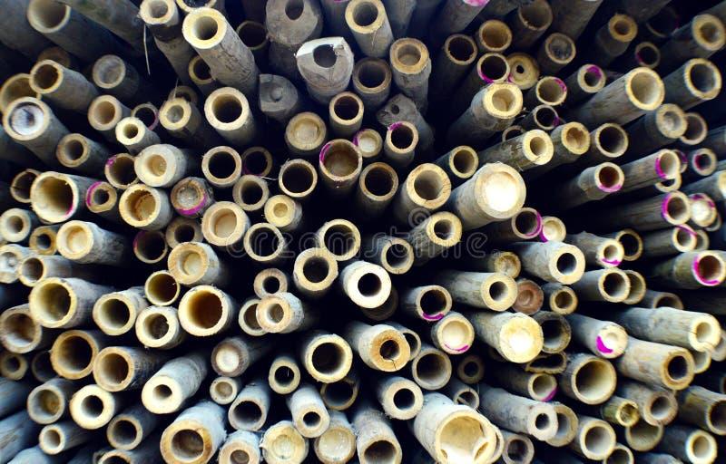 Bambuavsnittbakgrund royaltyfri bild