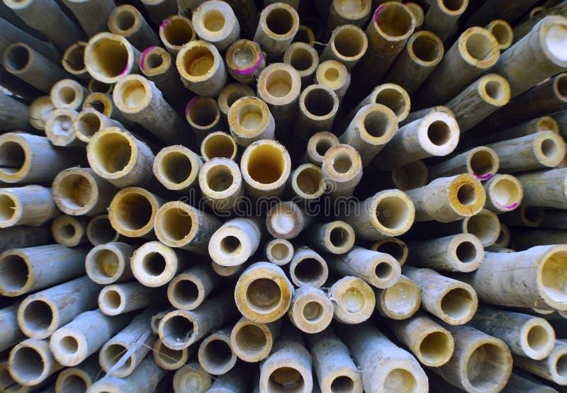 Bambuavsnittbakgrund royaltyfri foto