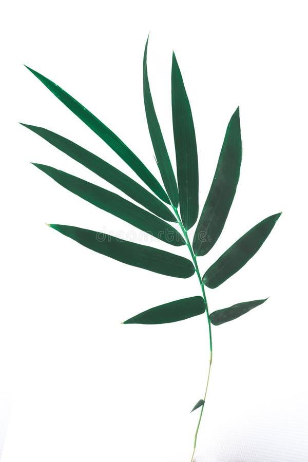 Bambublad som isoleras på vit bakgrund arkivfoton