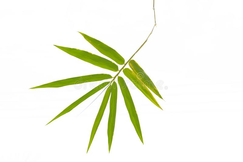 Bambublad som isoleras på vit bakgrund royaltyfria foton