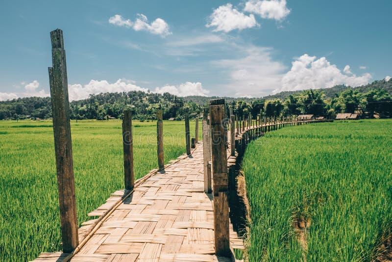 Bambubro på risfältet SuTong Pae Bridge i nordliga Thailand royaltyfria bilder