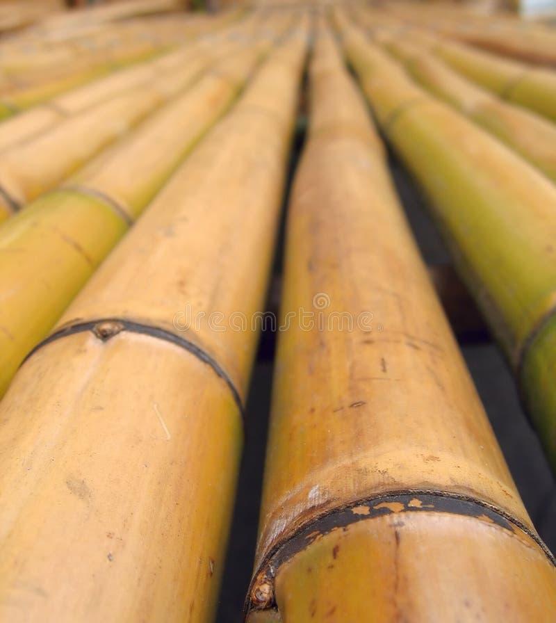 bambucloseuppoler royaltyfri foto