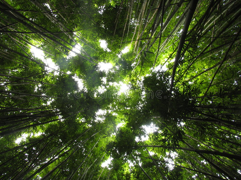 bambudjungelväxter royaltyfri foto