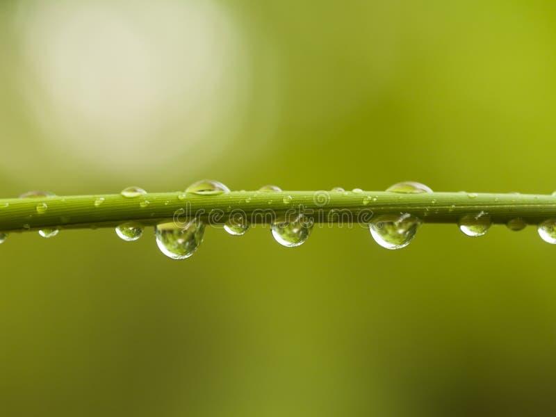 bambudroppar skjuter vatten royaltyfria foton