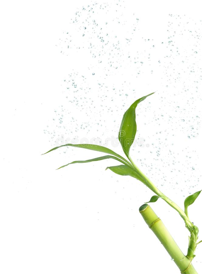 Bambufilial som är undervattens- med bubblor arkivbild