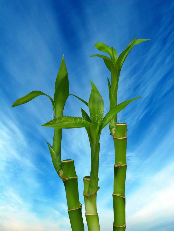 bambufjäder arkivfoton