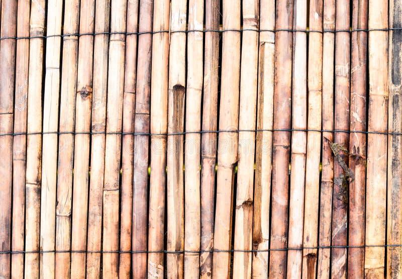 Bambuflotte royaltyfri foto