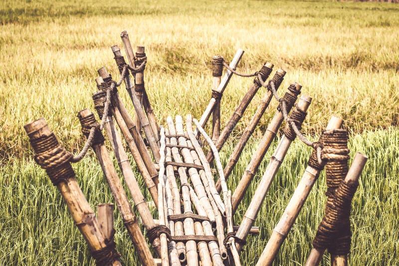 Bambugångbana till risfältet, bambubro på risfält i bygd av Thailand, träbro till fotopunkt i fält, royaltyfri fotografi