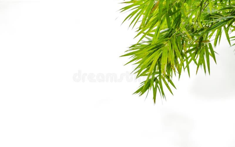 Bambugräsplansidor som isoleras på en vit bakgrund och arkivbild