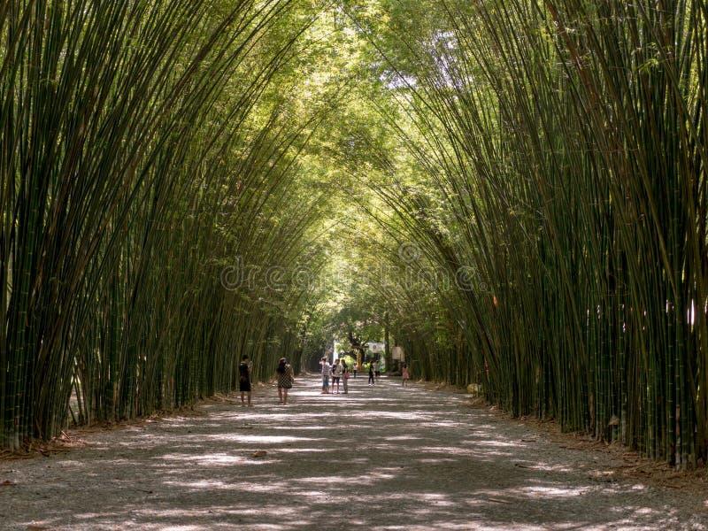Bambuklippa, Chulaporn Voramarn som en mycket grön källa som är härlig och royaltyfria bilder
