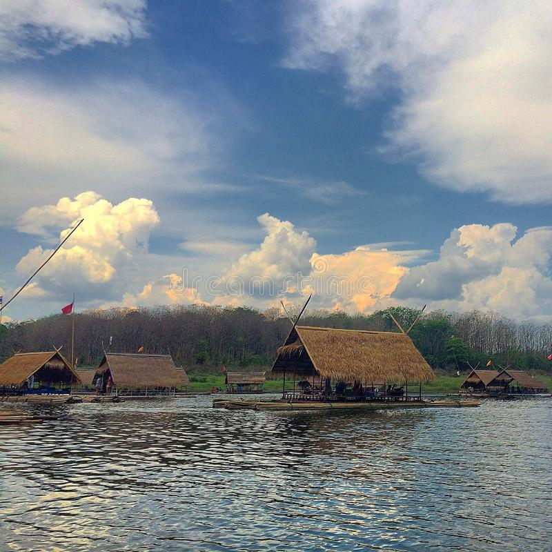Bambukojor arkivfoto