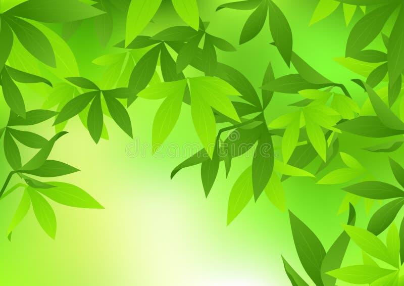 bambuleaf stock illustrationer