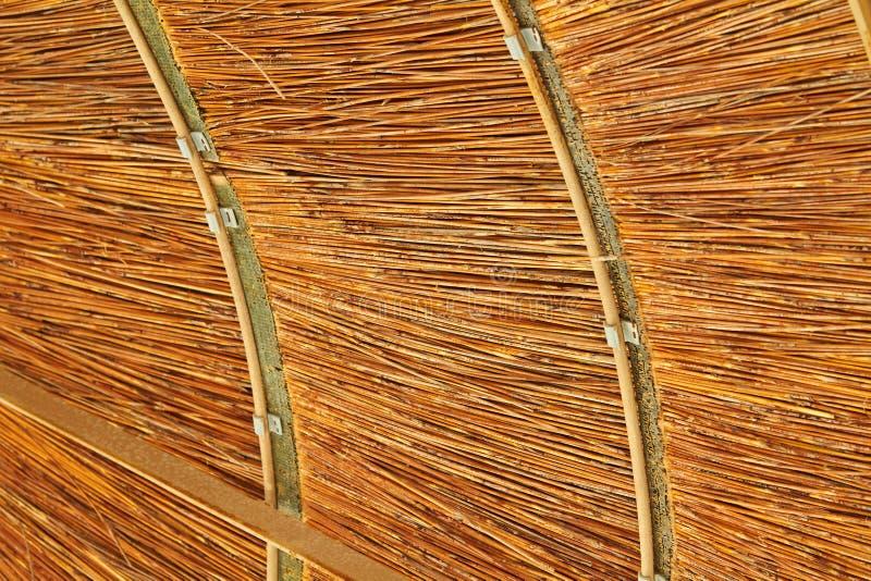 Bambumarkis som skapar skugga arkivbild