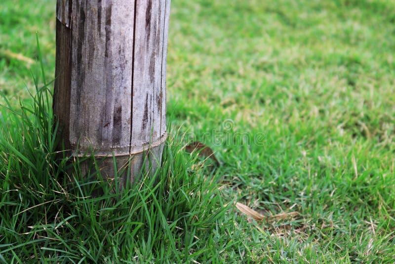 Bambupol på grönt gräs, pol på grön trädgård arkivfoto