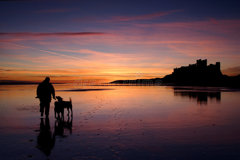 Bamburgh Castle. Walking the dogs at Bamburgh castle at low tide during sunrise royalty free stock image