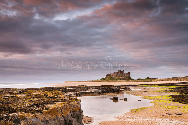 Bamburgh Castle after dawn. Rocks leading to Bamburgh Castle from the beach at low tide in the warm light after sunrise royalty free stock photo