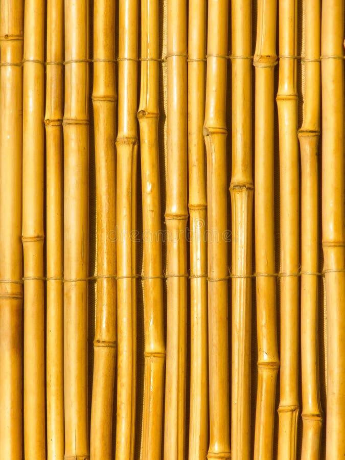 bambusów bagażniki susi drzewni obraz royalty free