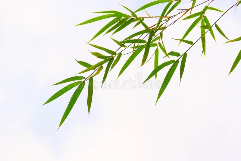 Bambusów liście obraz royalty free