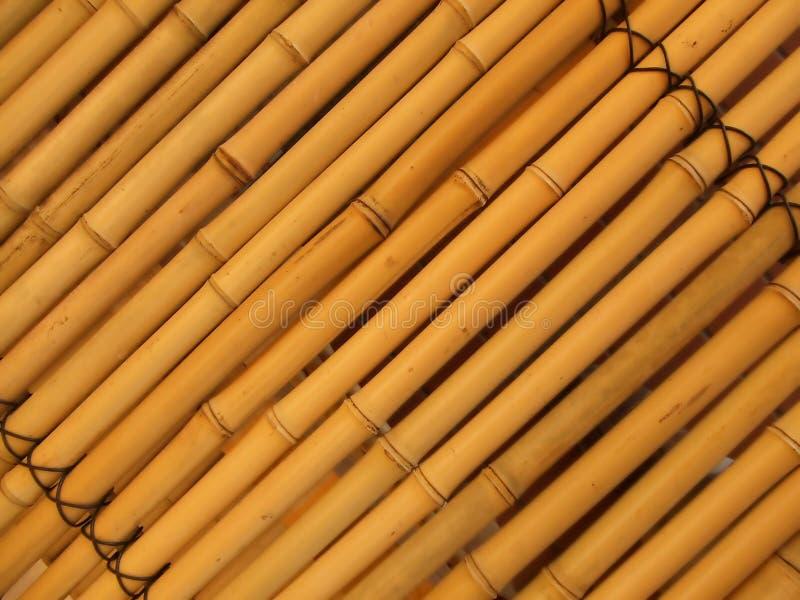 bambus ściany obraz royalty free