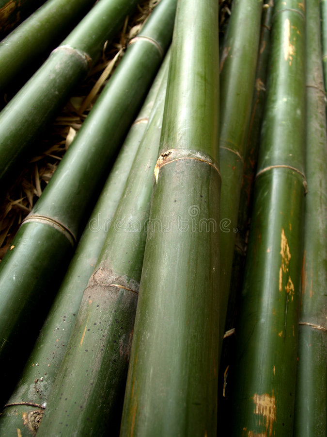 Bambus 10 stockfotografie