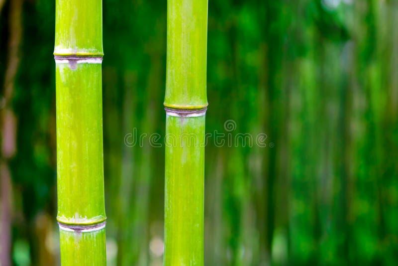 Bambus lizenzfreie stockfotos