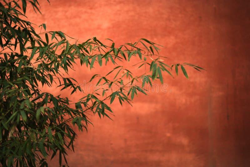 Bambus vektor abbildung