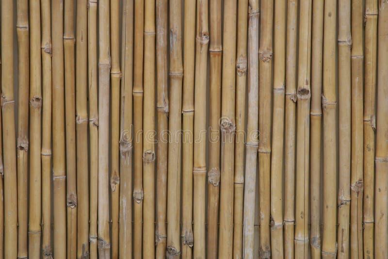 Download Bambus zdjęcie stock. Obraz złożonej z asia, zwrotniki, junior - 48756
