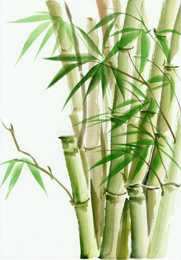 Bambus akwarela obraz royalty ilustracja