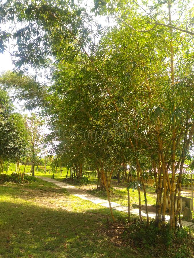 Bambus, Anlage, tropisch, Asien, Vietnamese, Gras, grün, gelb, mit Blumen, exotisch, Baum, Abfall, wachsend, Prozess, Natur, Flor stockfotografie