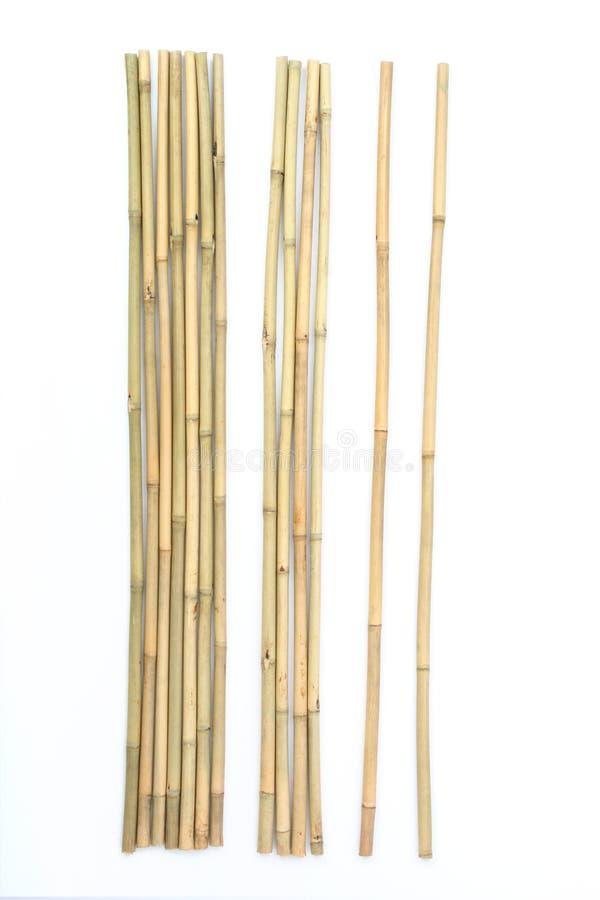 Bambus auf weißem Hintergrund lizenzfreie stockfotos