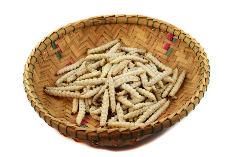Bambus-Caterpillar- - Omphisa-fuscidentalis stockbilder