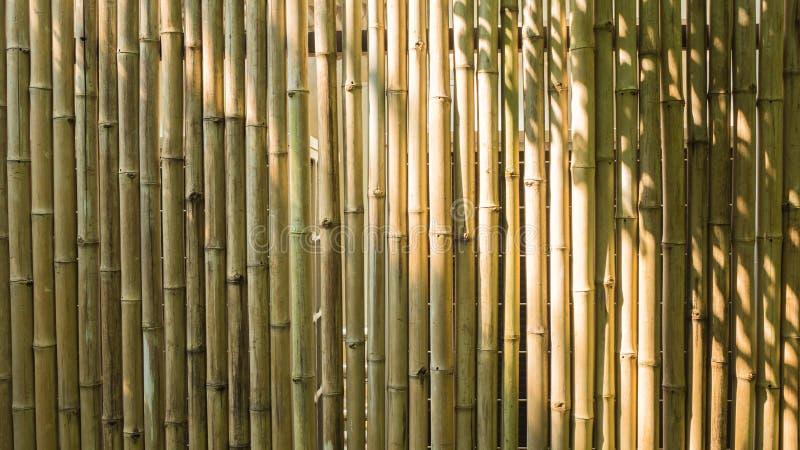 Bambus, drewniany cienia tło i tekstura lub obrazy stock