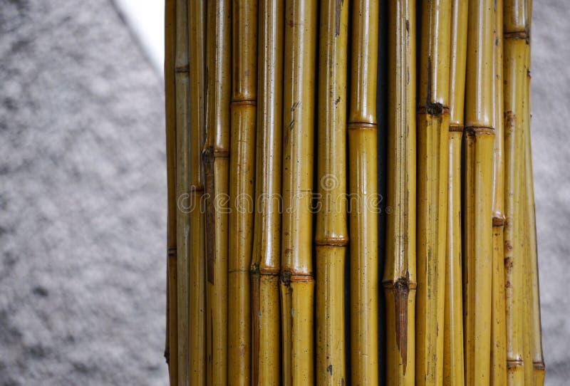 Bambus für Dekorationen am Stadtpark lizenzfreie stockfotos