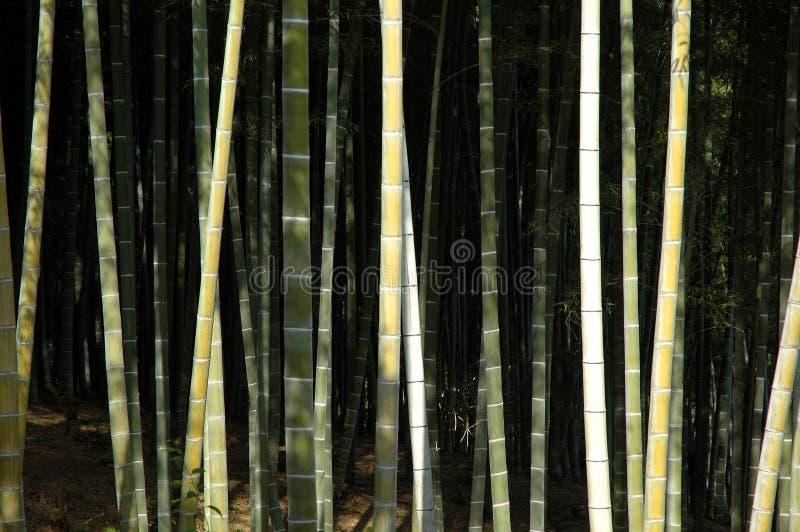 Bambus forrest zdjęcie royalty free