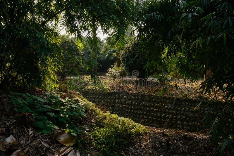 Bambus i trawa irygacyjnym przykopem w pogodnym zimy popołudniu obraz stock