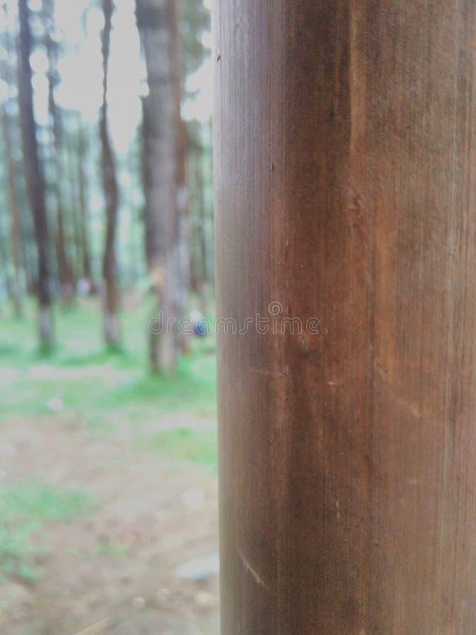 Bambus im Waldschönen Indonesien-foto stockbilder