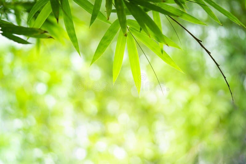 Bambus opuszcza z piękna bokeh pod światłem słonecznym z kopii przestrzenią fotografia stock