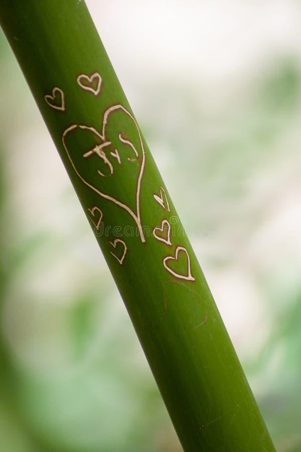 Bambus Rzeźbiący Z sercami i inicjałami obrazy royalty free